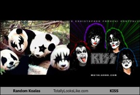 Random Koalas Totally Looks Like KISS