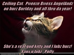 Ceiling Cat,  Pweeze Bwess AngelAndz on hurz Burfday and all thru da year!  She's a real gud kitty and I lubz hurz! Fanx n lubz,  Polly
