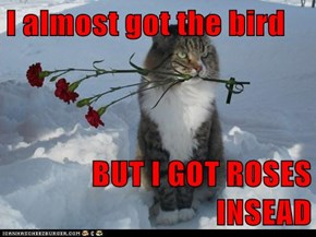 I almost got the bird  BUT I GOT ROSES INSEAD