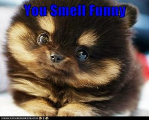 You Smell Funny