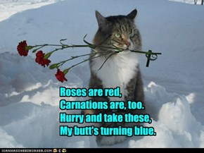 Grumpy Cat's Boyfriend