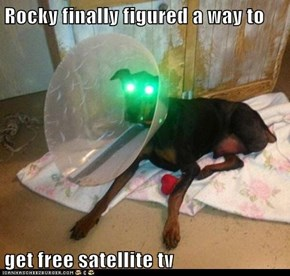 Rocky finally figured a way to  get free satellite tv