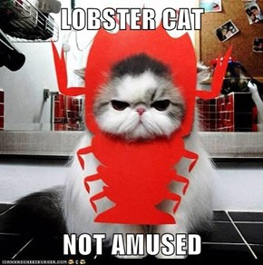 LOBSTER CAT   NOT AMUSED