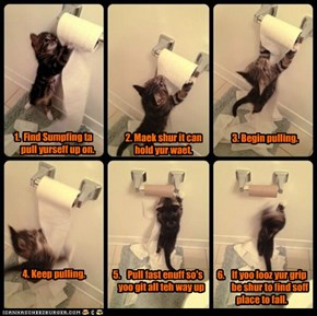 Bwave Asplorer Kitteh Climbs Bathroom Wall - In 6 Easy Steps