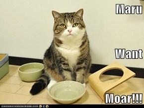 Maru Want Moar!!!