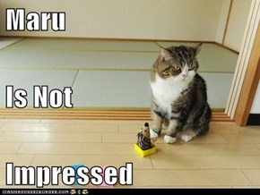Maru Is Not Impressed