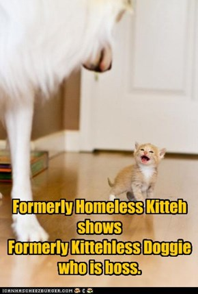 Formerly Homeless Kitteh shows  Formerly Kittehless Doggie who is boss.