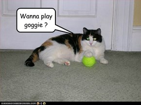 Wanna play goggie ?