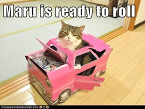 Maru is ready to roll