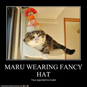 MARU WEARING FANCY HAT