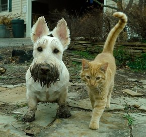 Kittehs R Owr Friends: Mud Buddies
