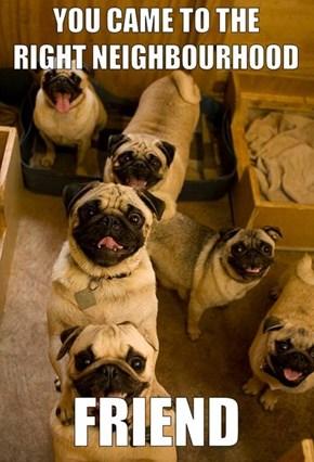 Thanks, Pugs!