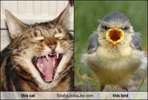 this cat Totally Looks Like this bird