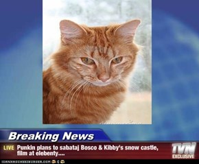 Breaking News - Punkin plans to sabataj Bosco & Kibby's snow castle, film at elebenty....