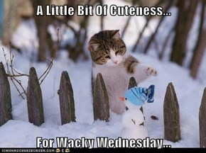 A Little Bit Of Cuteness...  For Wacky Wednesday...