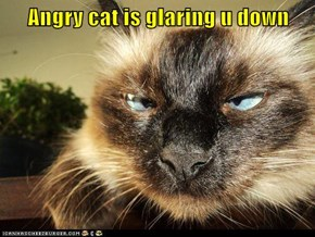 Angry cat is glaring u down