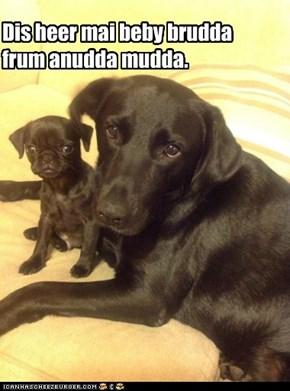 Dis heer mai beby brudda frum anudda mudda.