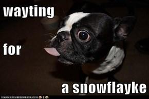 wayting for a snowflayke