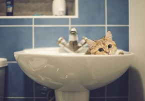 Cyoot Kitteh of teh Day: Find Another Sink