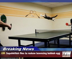 Breaking News - Supahkitteh flies tu reskew bownsing bebbeh egg
