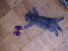 Cyoot Kitteh of teh Day: I'm Done.