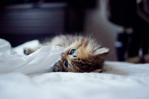 Cyoot Kitteh of teh Day: Bed Bug