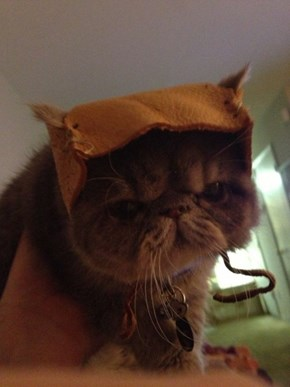 How to Make An Ewok Hat for Your Cat