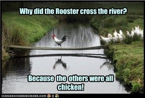 Why did the Rooster cross the river?