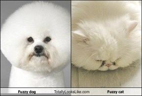 Fuzzy dog Totally Looks Like Fuzzy cat