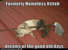 Formerly Homeless Kitteh      dreams of the good old days