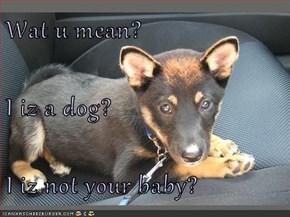 Wat u mean? I iz a dog? I iz not your baby?