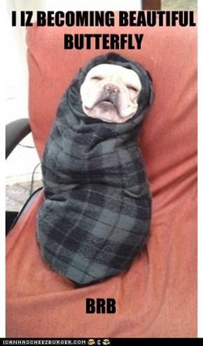 Canine Metamorphosis