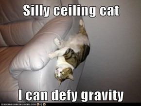Silly ceiling cat  I can defy gravity