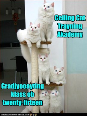 Ceiling Cat Trayning Akademy