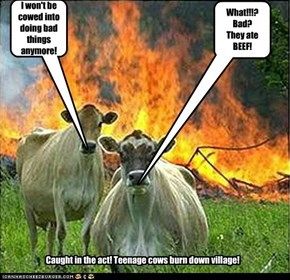 Caught in the act! Teenage cows burn down village!