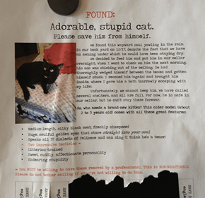 Save this Cat from Himself!