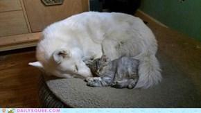 Siberian snuggle up!