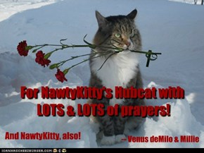 For NawtyKitty's Hubcat with  LOTS & LOTS of prayers!