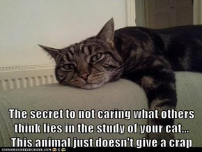 The secret to not caring what others think lies in the study of your cat...    This animal just doesn't give a crap
