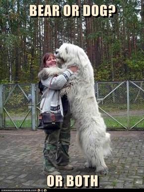 BEAR OR DOG?  OR BOTH