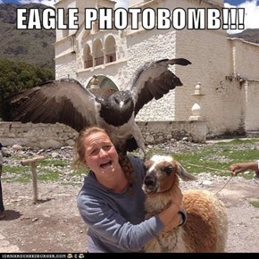 EAGLE PHOTOBOMB!!!