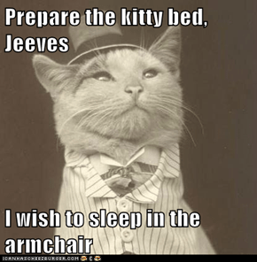 Prepare the kitty bed, Jeeves  I wish to sleep in the armchair