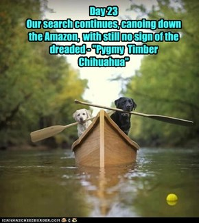 "Day 23  Our search continues, canoing down the Amazon,  with still no sign of the dreaded - ""Pygmy  Timber Chihuahua"""