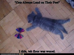 """Cats Always Land on Their Feet""  I dids, teh floor was waxed."