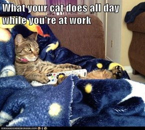 What your cat does all day while you're at work