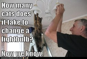 How many                             cats does                                     it take to                                      change a                               lightbulb?  Now we know.