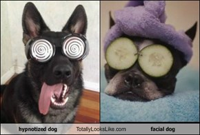 hypnotized dog Totally Looks Like facial dog