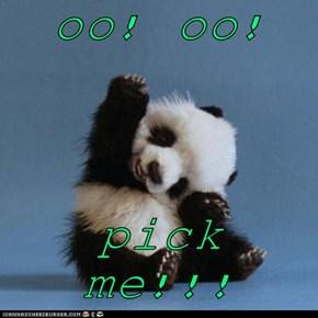 oo! oo!  pick me!!!