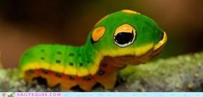 Creepicute: Spicebush Caterpillar