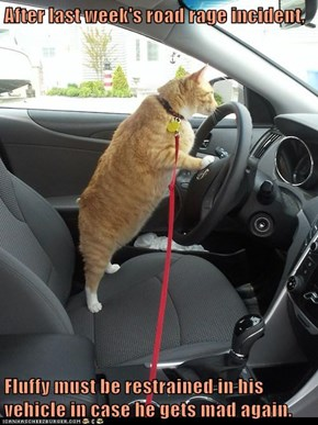 After last week's road rage incident,  Fluffy must be restrained in his vehicle in case he gets mad again.